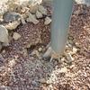 Remover base de un poste que sostiene una vela-toldo