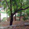 Proyecto para acondicionar jardín