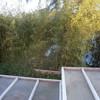 Eliminar bambú de mi jardin