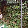 Poda general en jardín de la vivienda