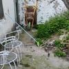 Reforma loft + baño + patio córdoba, cercano corredera