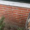 Tala arbol y reparar muro