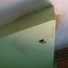 Impermeabilizar terraza por filtraciones