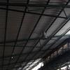 Quitar techo de uralita y sustituir por panel sandwich