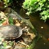 Realizar un pequeño estanque en el jardín