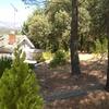 Talar ocho pinos de seis a diez metros en navalafuente