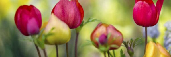 Garden 1_603876