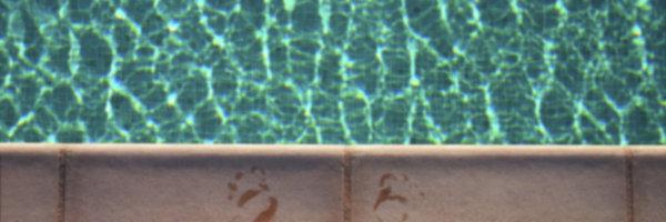 Pool 4_603839