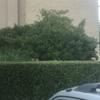 Garden Mantenimiwntoo
